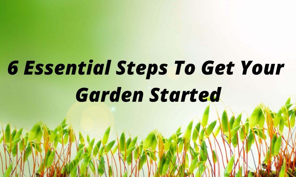 6 Essential Steps To Get Your Garden Started