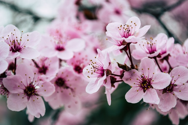 Flowers as companion plants